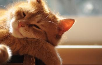 10 คำถาม คนรัก  แมว ตัวจริง