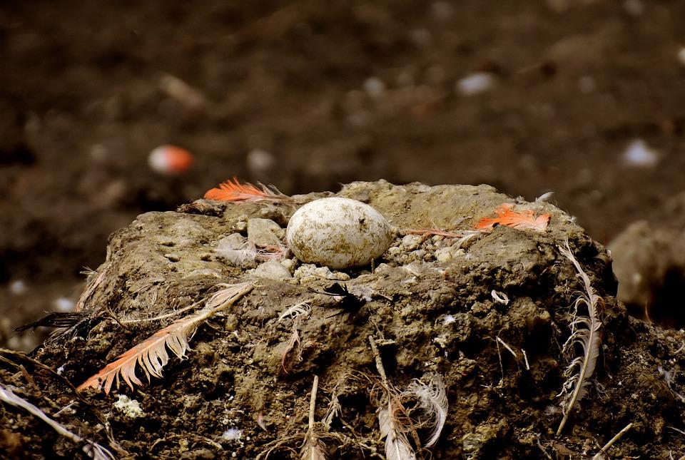 ไข่นกนกฟลามิงโก