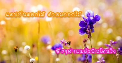 แคปชั่นดอกไม้ คำคมดอกไม้ซึ่งๆอ่านแล้วฟินโดนใจเพราะดอกไม้และความรักเป็นของคู่กัน