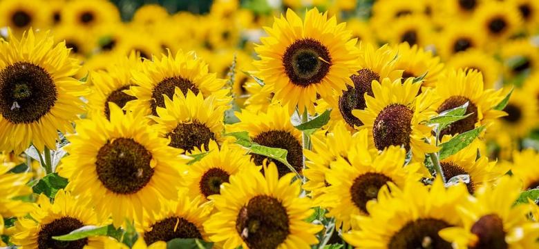 แคปชั่นดอกไม้ คำคมดอกไม้