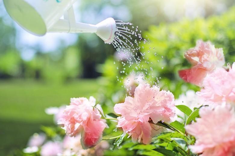คำคมดอกไม้ ถ้ารักเราจะดูแลรดน้ำให้มันอย่างดี