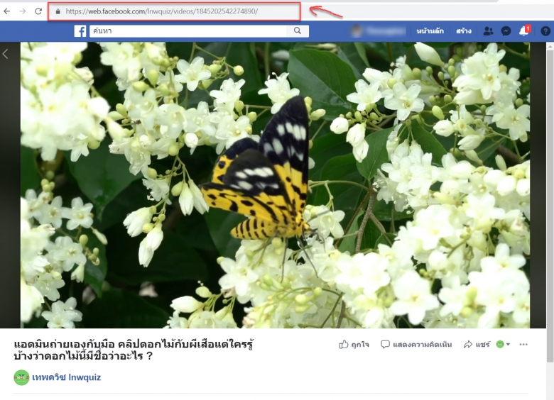 วิธีการก็อปปี้ลิงค์วิดีโอของ facebook