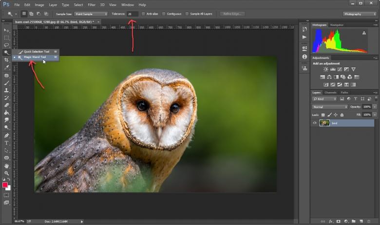 Magic Wand Tool  สร้าง Selection เพื่อเลือกพื้นหลังที่ต้องการลบใน Photoshop