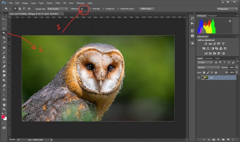 สร้าง Selection เพื่อเลือกพื้นหลังที่ต้องการลบใน Photoshop