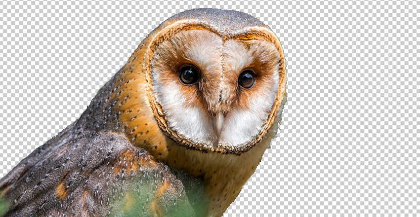 วิธีสร้างรูป PNG ให้พื้นหลังโปร่งใสใน Photoshop ด้วย Magic Wand Tool