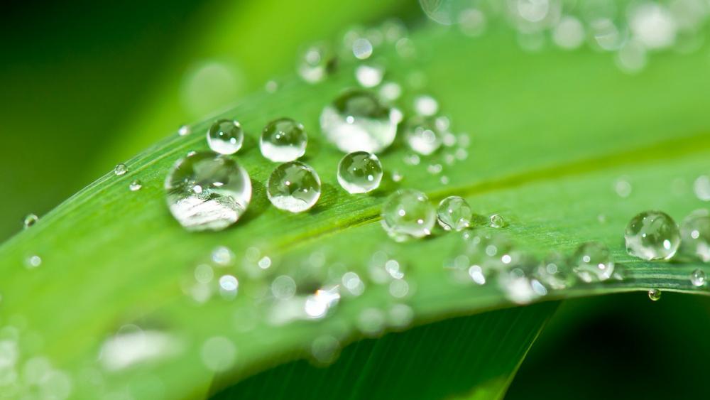 หยดน้ำบบใบไม้ตามธรรมชาติ