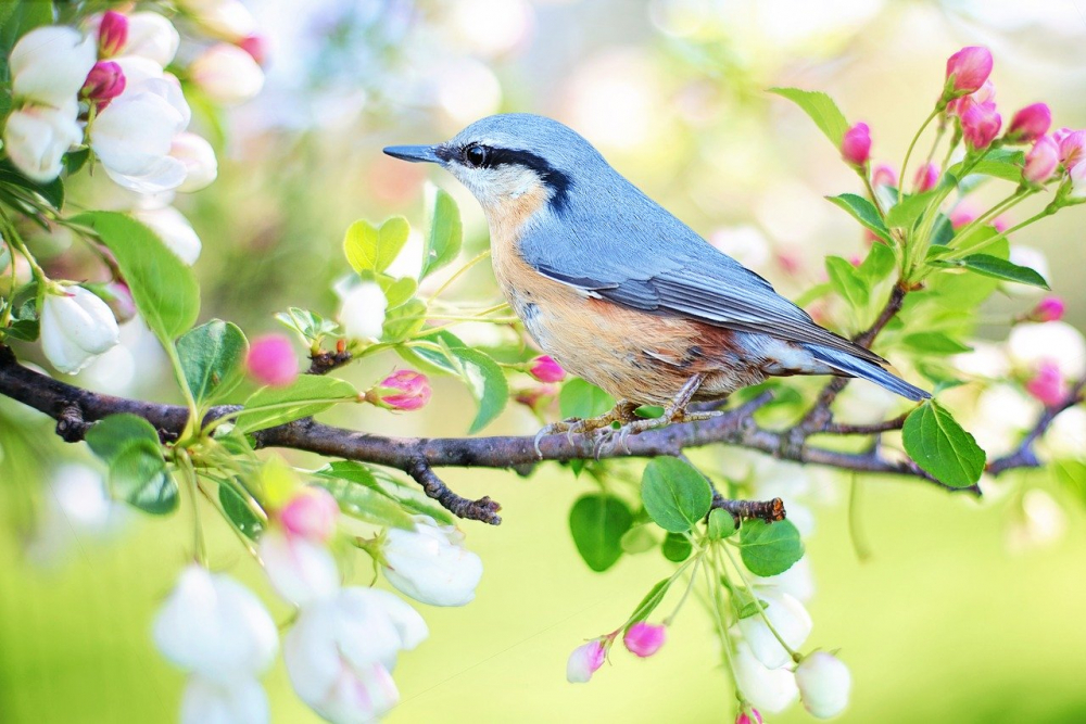 นกและธรรมชาติ
